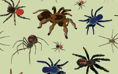 Posizione del ragno: per tessere la trama del vostro piacere!
