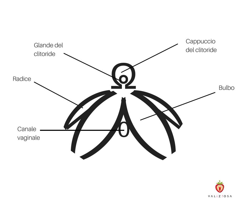 come si presenta il clitoride