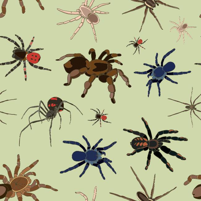 posizione del ragno